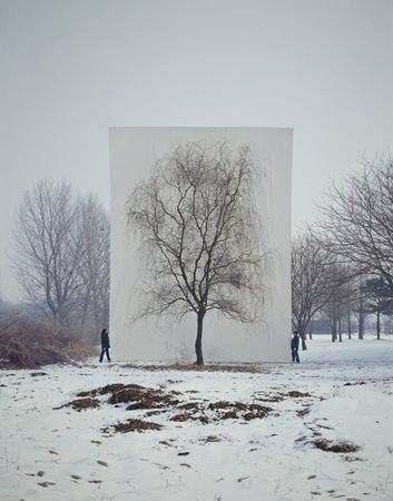 Tree photos by Myoung Ho Lee